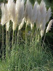 Gräsersorten gräser bambuspflanzen hagebaumarkt arens hilgert neuenrade